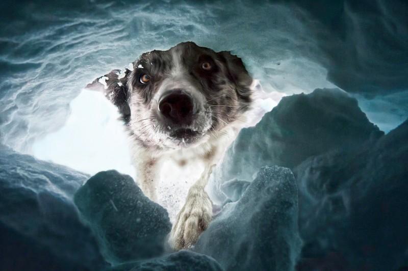Под снежными лавинами в Швейцарии гибнет много людей. Собаки-спасатели — это ваш шанс