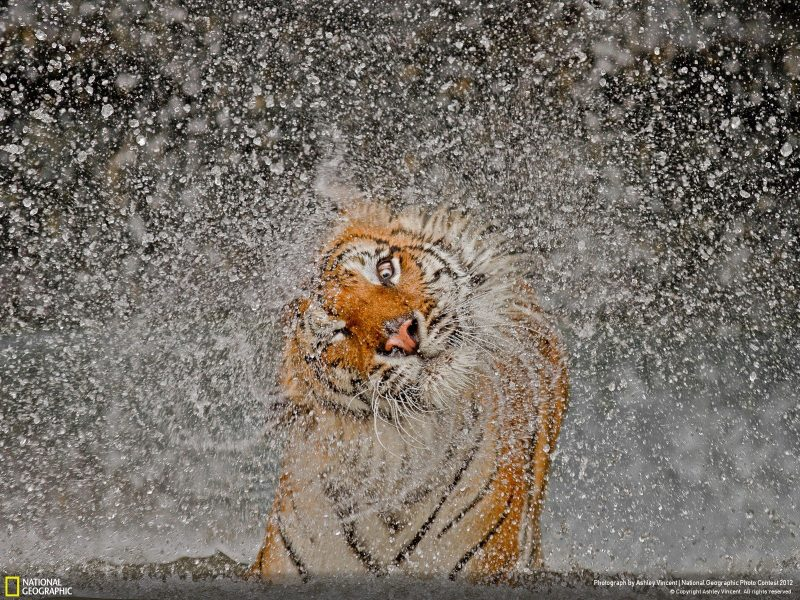National_geographic_2012_Photo_By_Ashley_Vincent