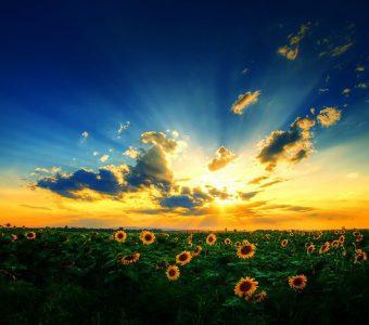 Прекраснейшее небо и подсолнухи | Лучшие фотографии в мире!