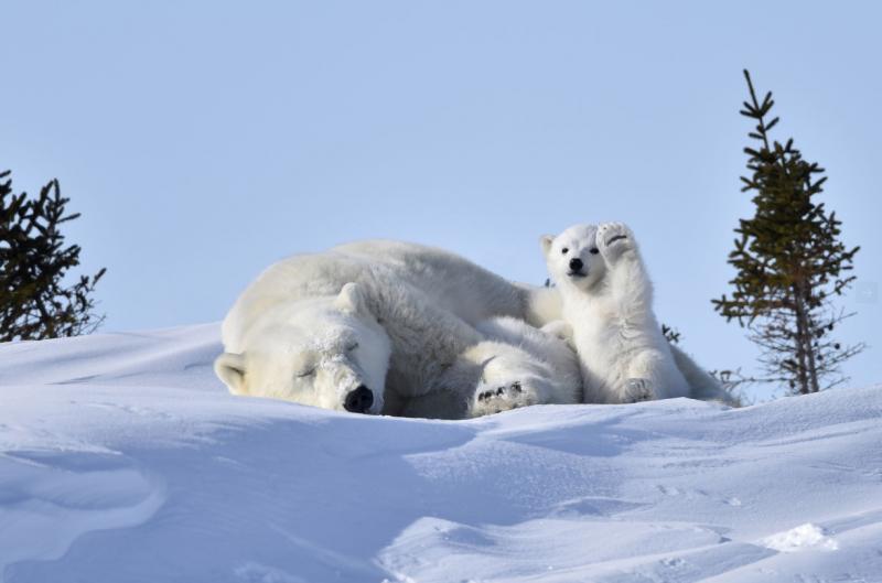 10 - Лучшие фотографии в мире - Медвежонок здоровается