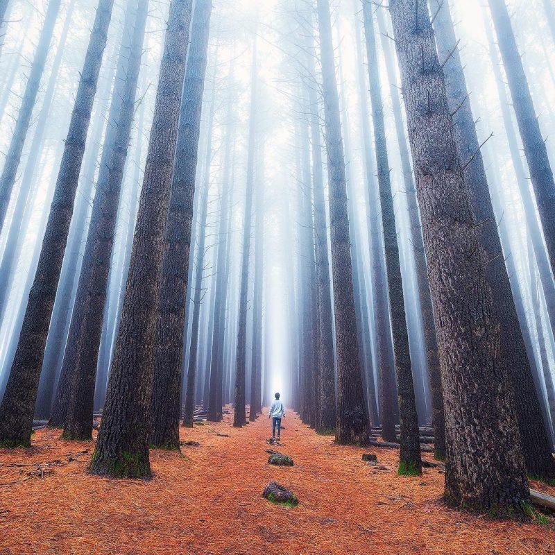 CxvOqcUVQAAihCC - Лучшие фото мира. Сборник лучших фото - Среди гигантов