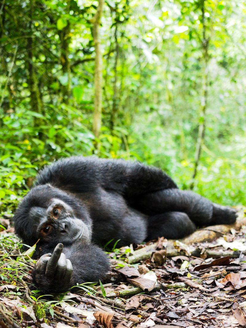 b97aa3c5 0846 42bb adc1 e97fb9d30140 1530x2040 - Лучшие фотографии в мире - Неприличная обезьяна
