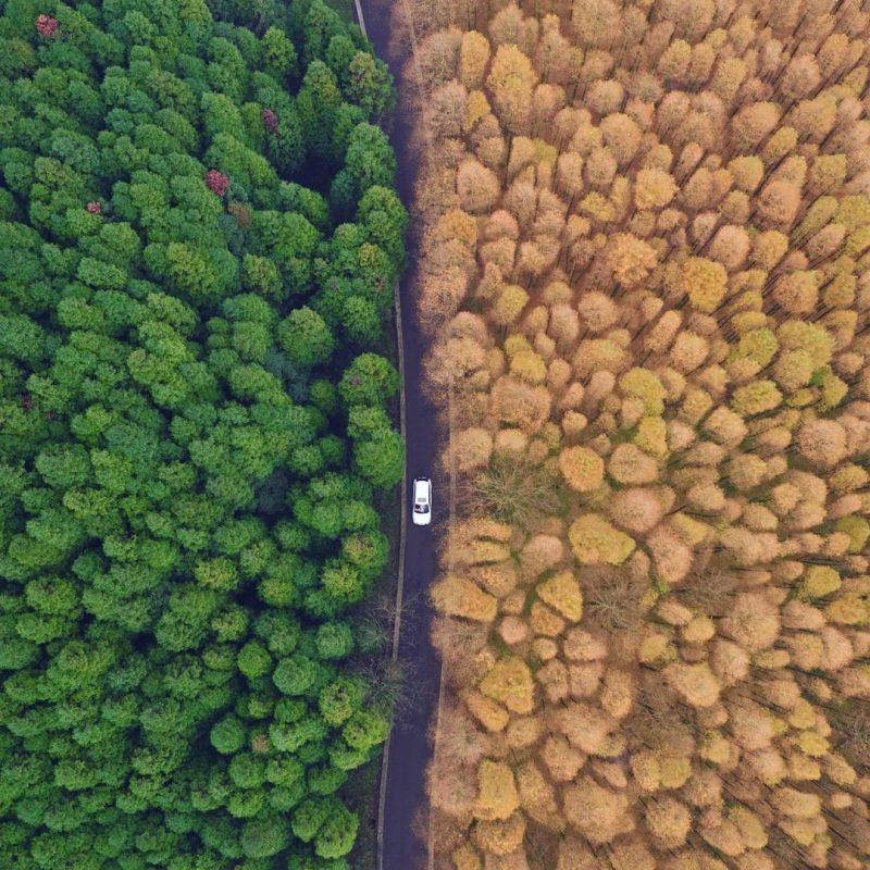 1480627916188329432 - Лучшие фото мира. Сборник лучших фото - Национальный эко-парк в городе Чунцин на юго-западе Китая