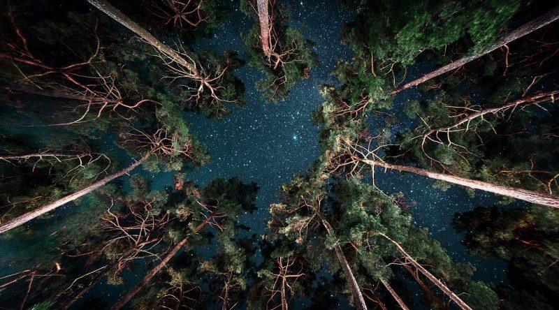 Сосны и звёздное небо