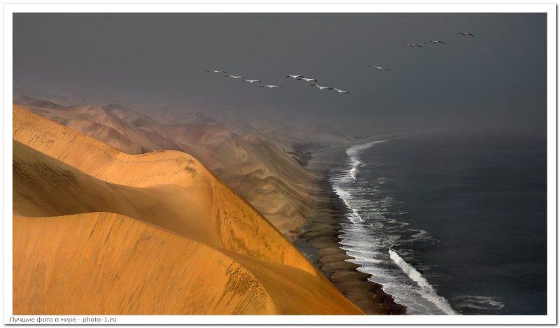 438787 - Лучшие фото мира. Сборник лучших фото - Место, где пустыня Намиб встречается с морем, 5 фото
