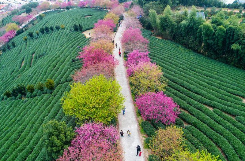 0D4XPgJoylU - Лучшие фото мира. Сборник лучших фото - Смотрите, какие деревья мы увидели минувшей зимой в разных частях света