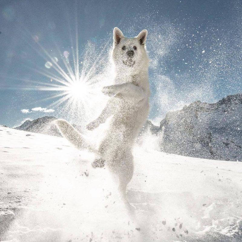15140845491219440 - Лучшие фотографии в мире - Танец в снегу