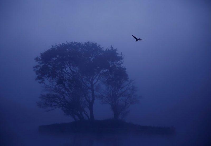 A4bJrF19nCU - Лучшие фото мира. Сборник лучших фото - Смотрите, какие деревья мы увидели минувшей зимой в разных частях света