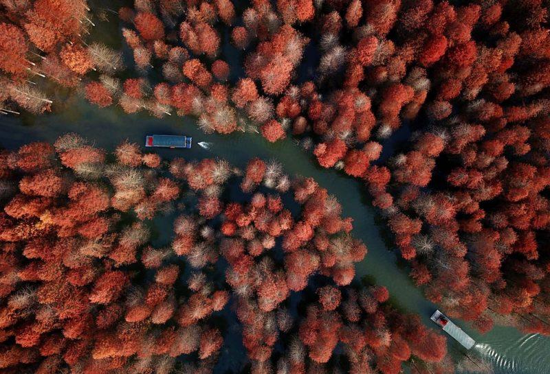 BD3VsVIYn E - Лучшие фото мира. Сборник лучших фото - Смотрите, какие деревья мы увидели минувшей зимой в разных частях света