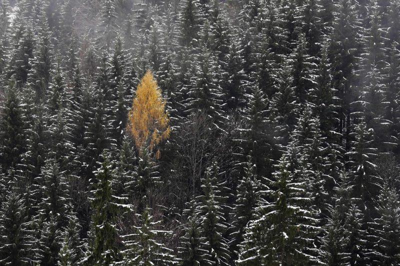 LnqrND4JnVE - Лучшие фото мира. Сборник лучших фото - Смотрите, какие деревья мы увидели минувшей зимой в разных частях света