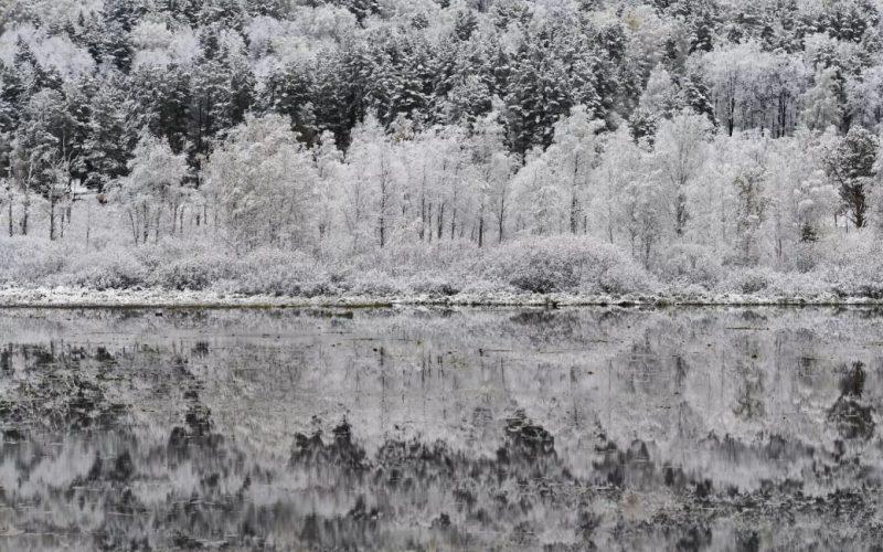 kt RCSsAeM - Лучшие фото мира. Сборник лучших фото - Смотрите, какие деревья мы увидели минувшей зимой в разных частях света
