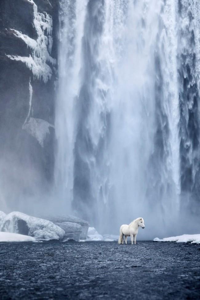 1532944512175561871 - Лучшие фотографии в мире - Фотограф сделал очень красивые снимки лошадей Исландии (8 снимков)