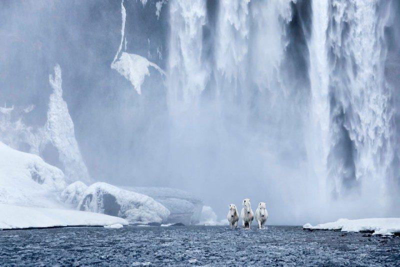 1532944567140217726 - Лучшие фотографии в мире - Фотограф сделал очень красивые снимки лошадей Исландии (8 снимков)