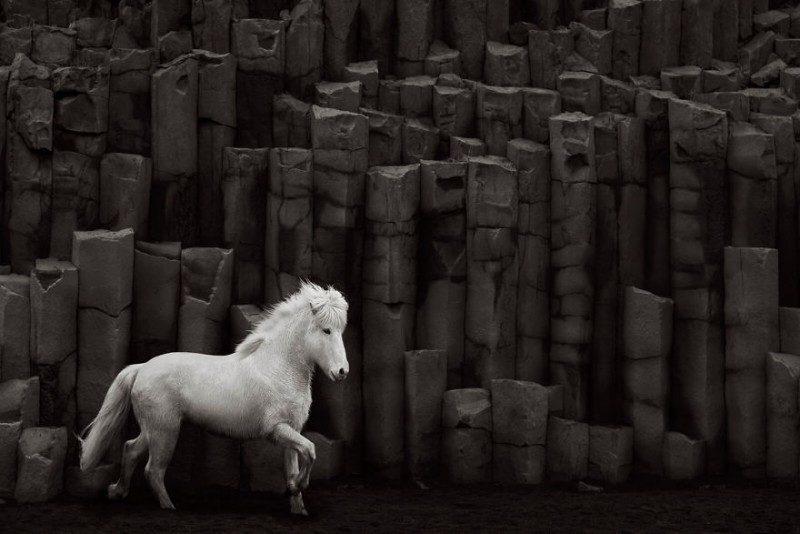 1532944581149661849 - Лучшие фотографии в мире - Фотограф сделал очень красивые снимки лошадей Исландии (8 снимков)